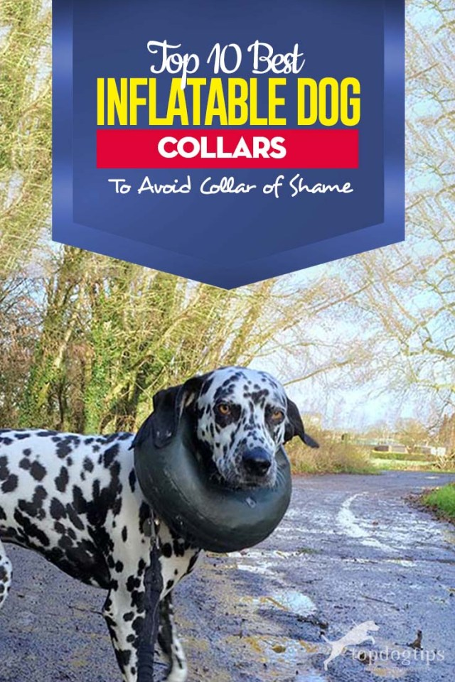 Top 10 Best Inflatable Dog Collars
