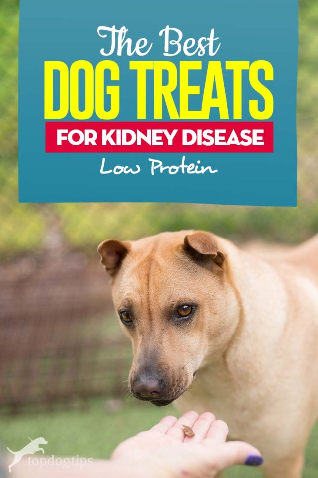 Top 5 Best Dog Treats for Kidney Disease (Low Protein)