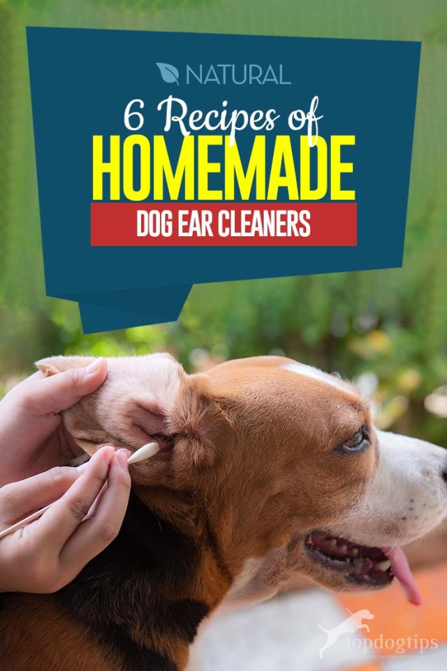 Top 6 Recipes of Homemade Dog Ear Cleaners