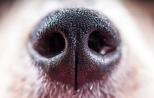 5 Things You Can Do About Your Dog's Runny Nose