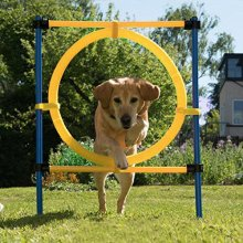 Jump Hoop Agility Starter Equipment from Pawise