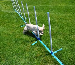 Agility Weave Poles Adjustable 6 Pole Set with Case from Cool Runners