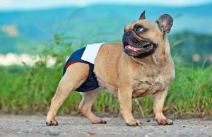 Dog Leaking Urine - Causes and Treatments