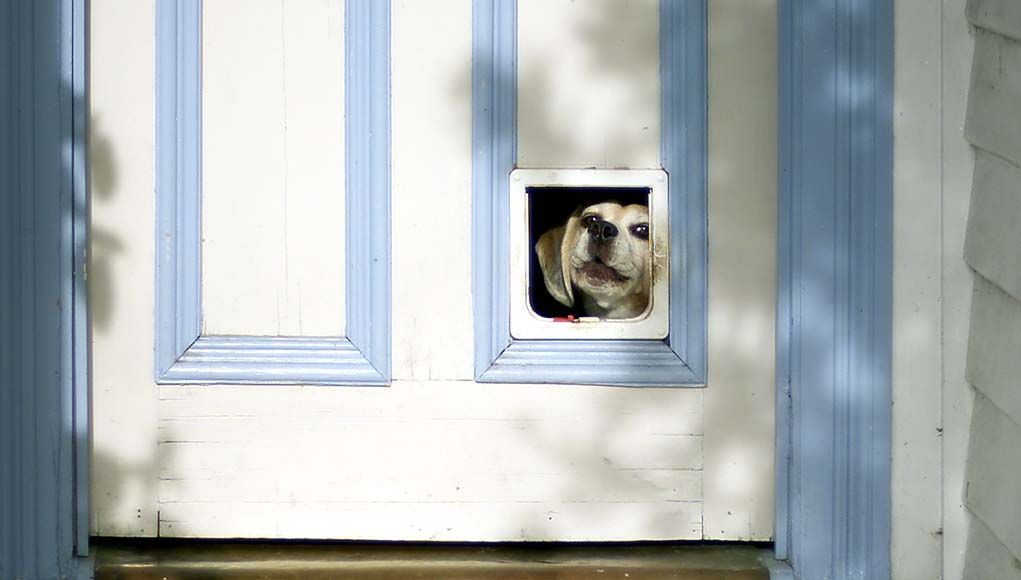 How to Shop for Dog Doors