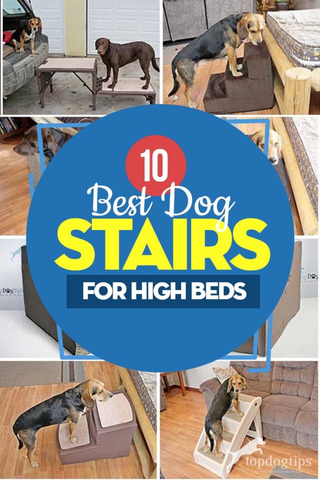 The 10 Best Dog Stairs for High Bed