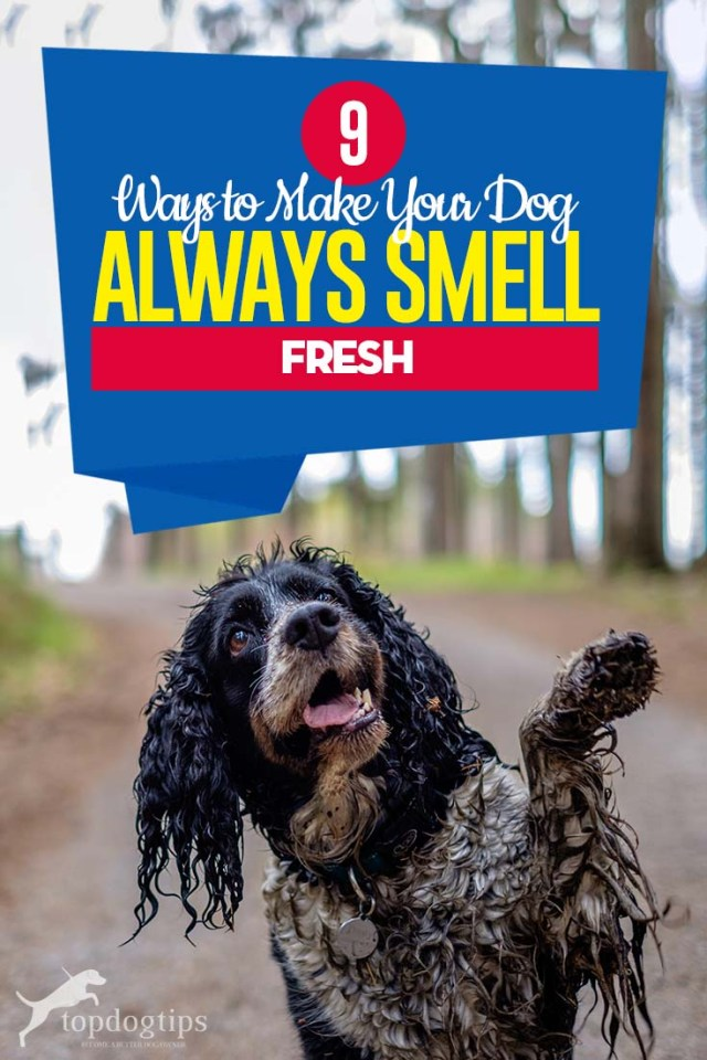 The 9 Ways to Make Your Dog Always Smell Fresh