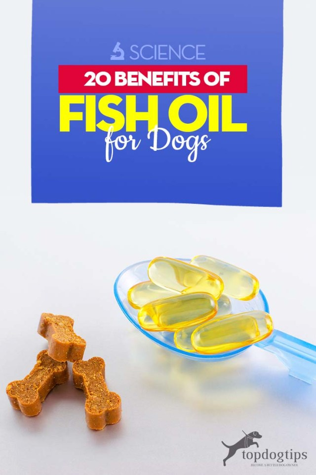 Top 20 Benefits of Fish Oil for Dogs (Based on Science)