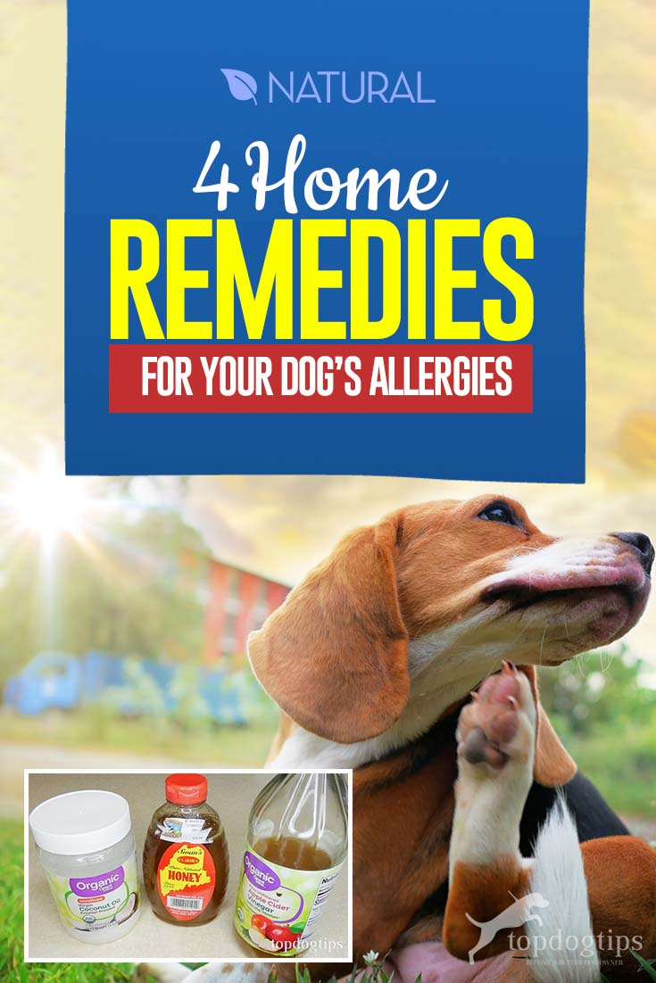 4 Home Remedies for Dog Allergies – Top Dog Tips