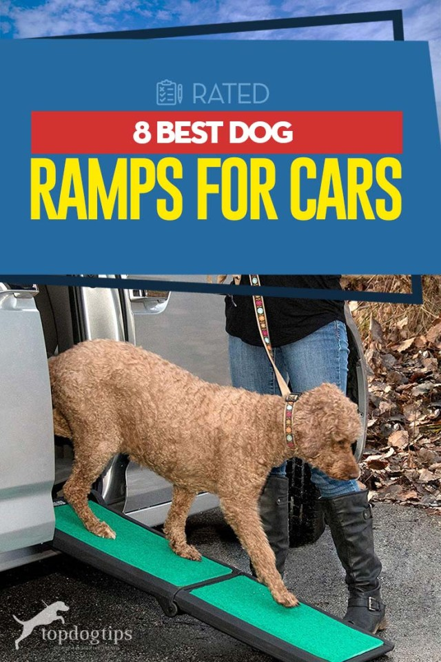Top 8 Best Dog Ramps for Cars