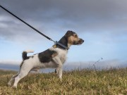 Top 9 Best No Pull Dog Collar Choices