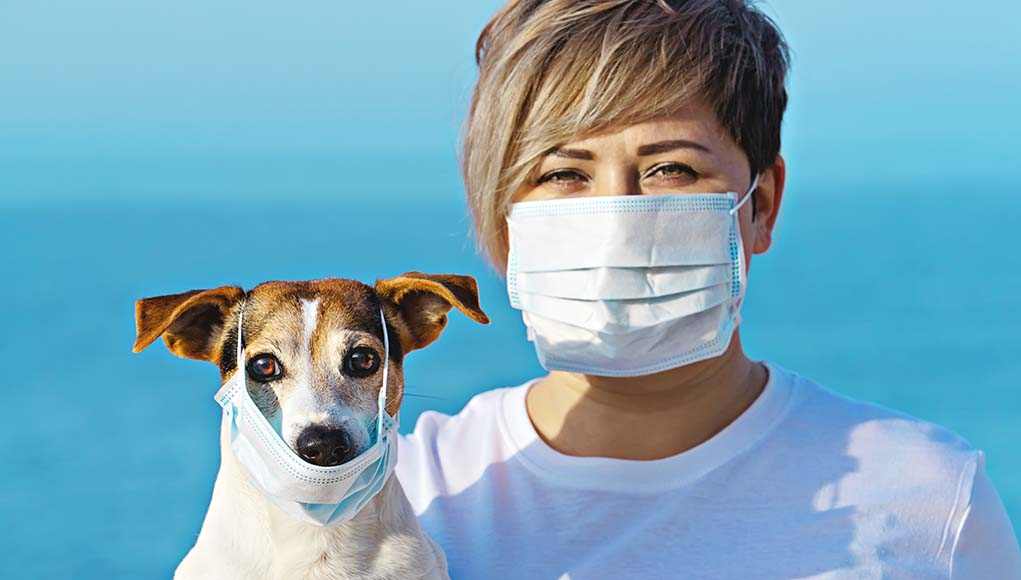 4 Facts About Coronavirus All Dog Owners Must Know