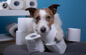 5 Dog Products to Stock Up On While Sheltering in Place