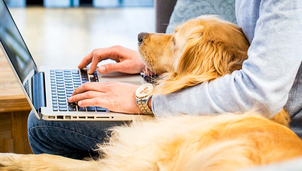 7 Tips for Dog Owners Working from Home