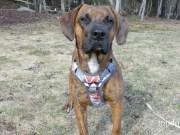 Embark Urban Dog Harness
