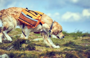 The Best Dog Backpacks and Saddle Bags for Dogs Adventuring in 2020