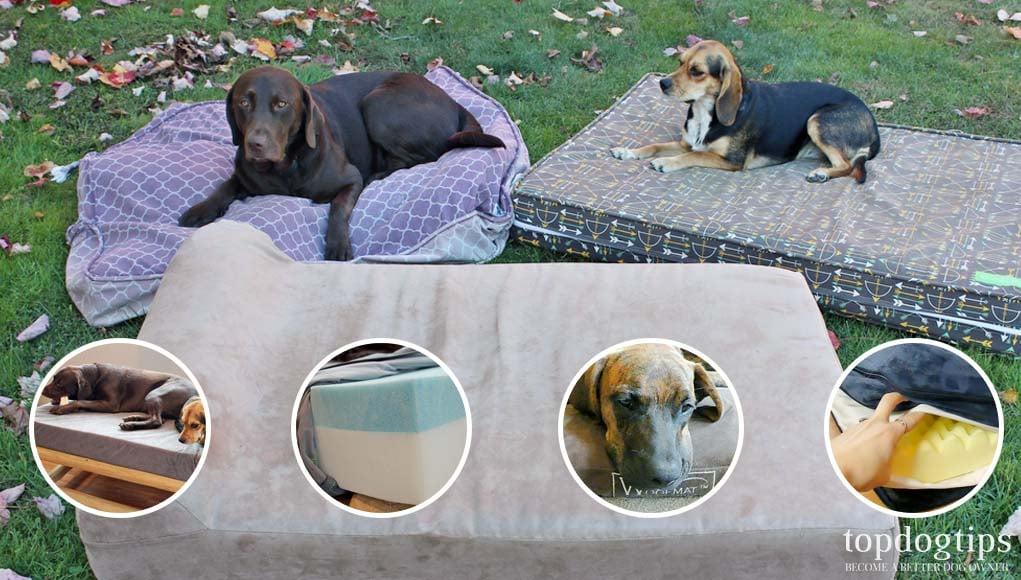 Top Most Indestructible Dog Beds