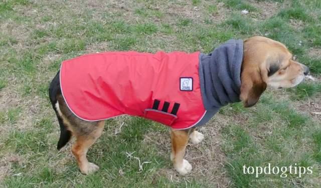 Dog jacket with hood down