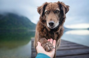 ways your dog asks for help