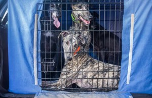 5 Best Dog Cage Covers for Crates