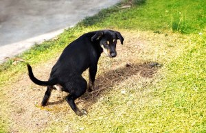 Dog Urine Killing Grass - 10 Ways to Fight or Prevent This