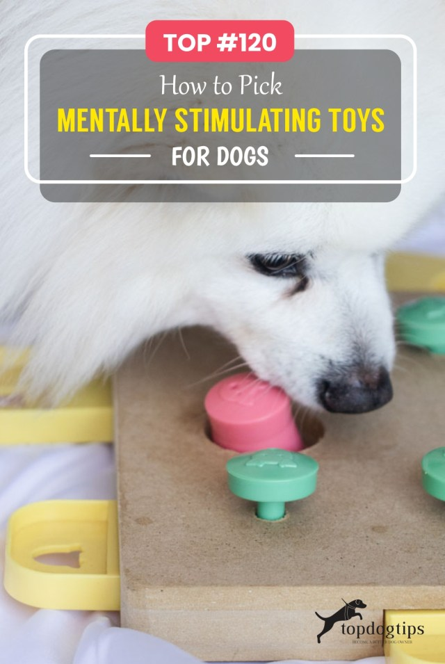 TOP -120 How to Pick Mentally Stimulating Toys for Dogs