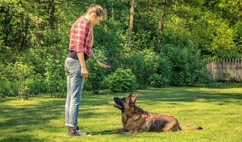 How Much to Tip Dog Trainers?