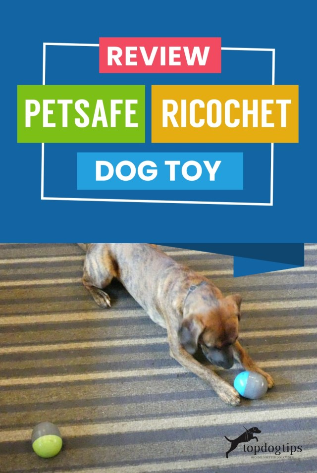 Review- PetSafe Ricochet Dog Toy