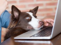 5 Things You Learn Running a Pets Website