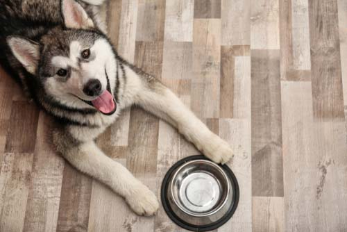 How to Choose the Best Dog Food