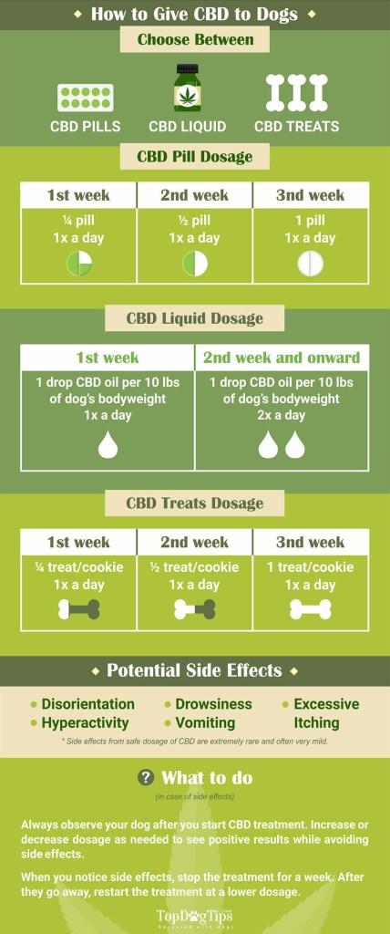 dog cbd infographic
