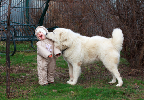 introducing children to dogs
