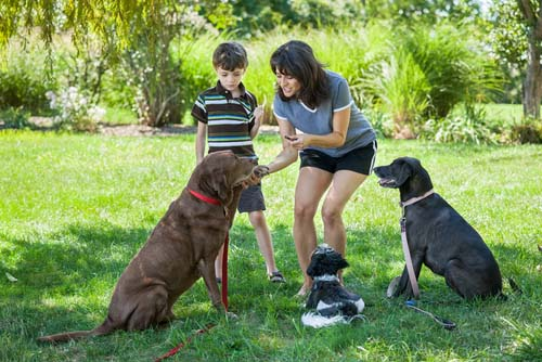 mom teaching son to train dogs