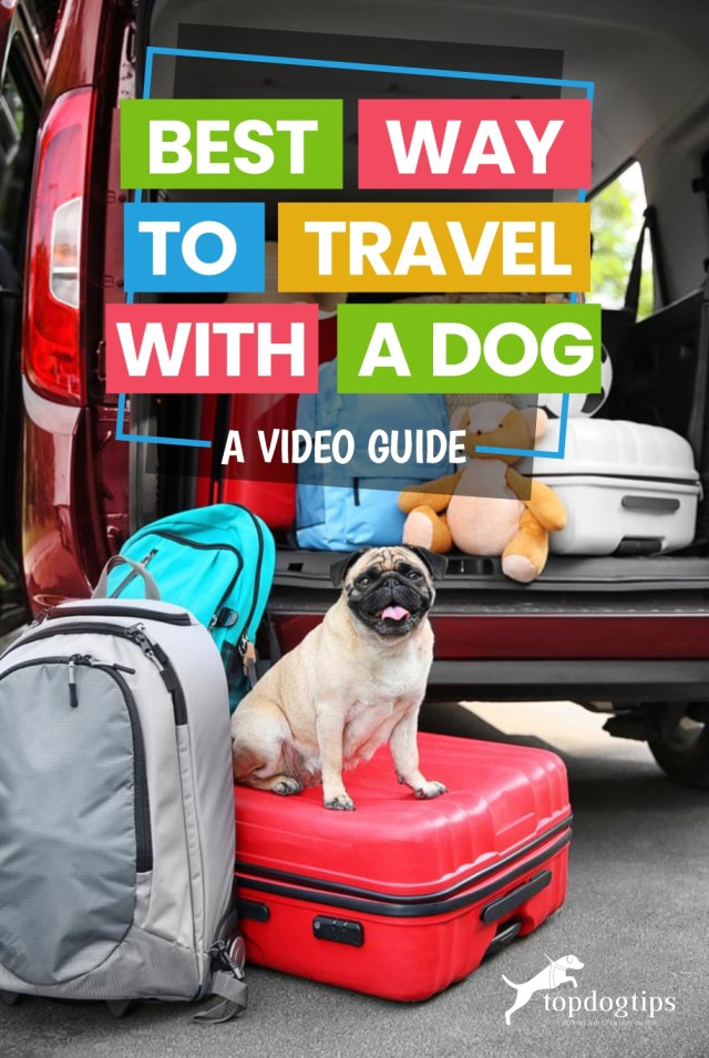 Best Way To Travel with A Dog (A Video Guide)