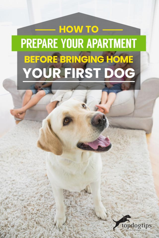 How to Prepare Your Apartment Before Bringing Home Your First Dog