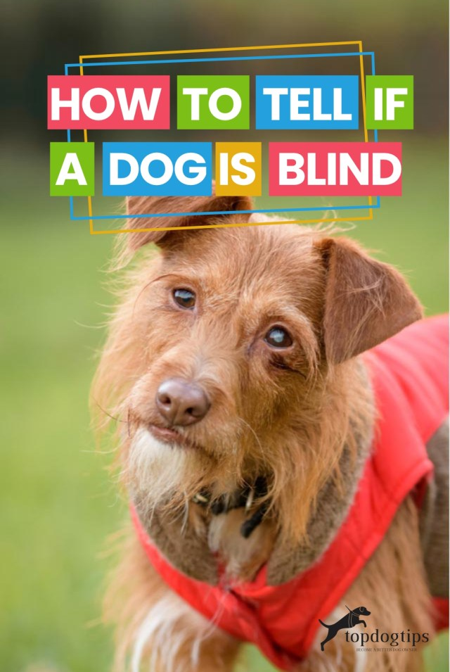 How To Tell If A Dog Is Blind