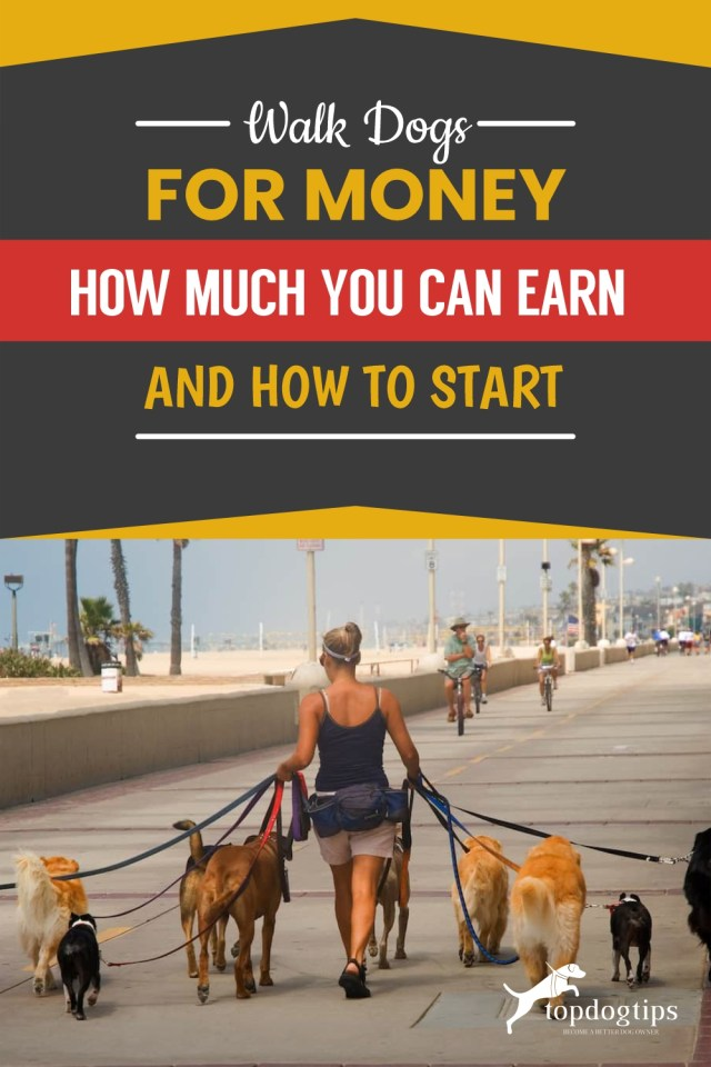 Walk Dogs for Money How Much You Can Earn and How to Start