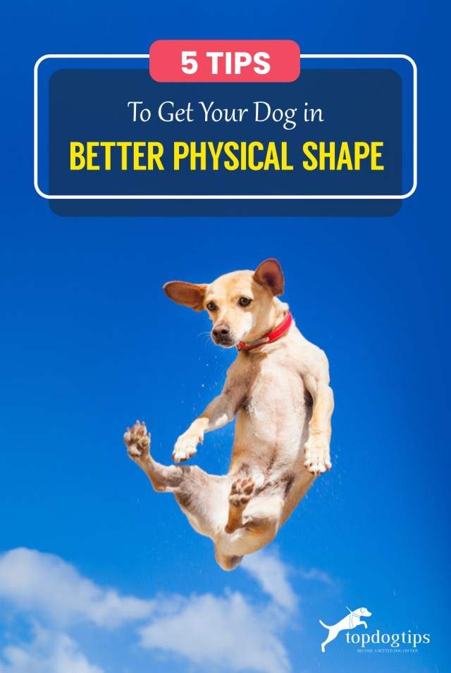 5 Tips to Get Your Dog in Better Physical Shape