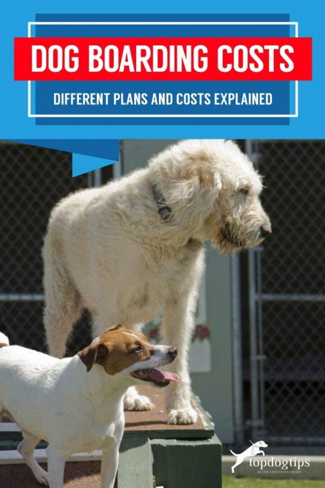 Dog Boarding Costs_Different Plans and Costs ExplainedDog Boarding Costs_Different Plans and Costs ExplainedDog Boarding Costs_Different Plans and Costs Explained
