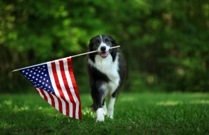 Why It's Important to Buy Pet Products Made in the USA