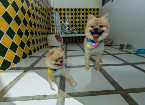 dogs at a pet hotel