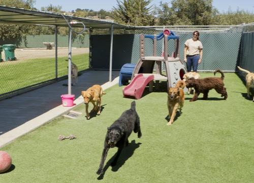 dog kennel boarding