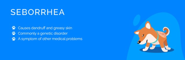 Skin Problems in Dogs