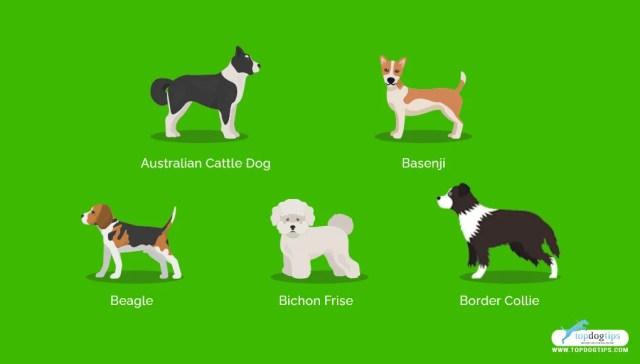 Healthiest Medium and Small Dog Breeds