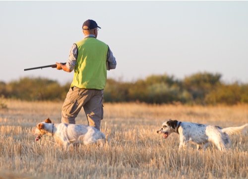 best hunting dogs english setter