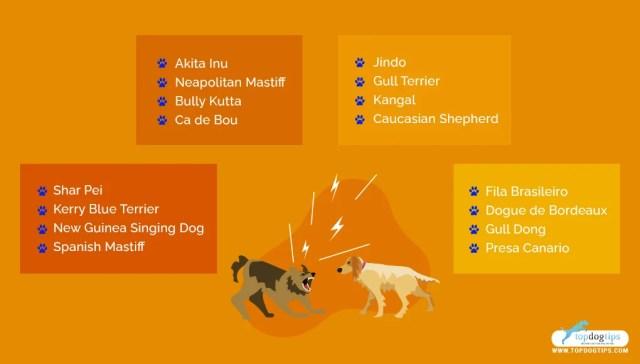 Fighting Dog Breeds