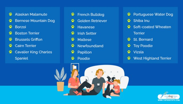 dog breeds for families