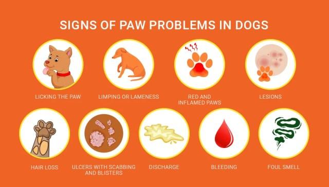 Dog Paw Problems