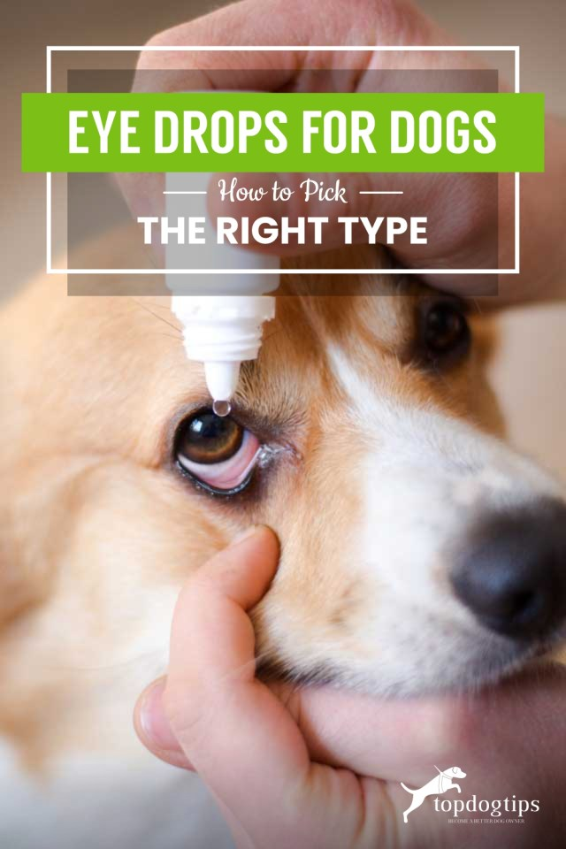 Eye Drops for Dogs- How to Pick the Right Type