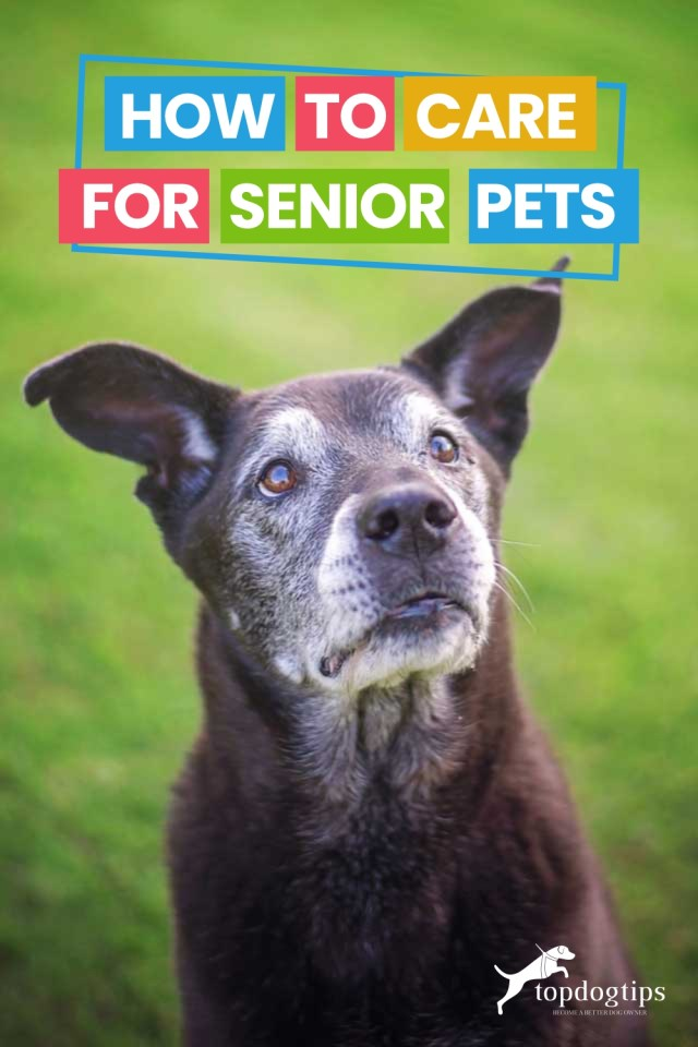 How To Care for Senior Pets