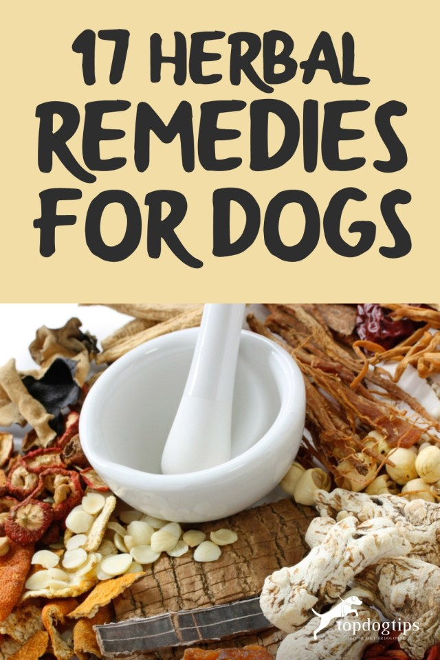 17 Herbal Remedies for Dogs